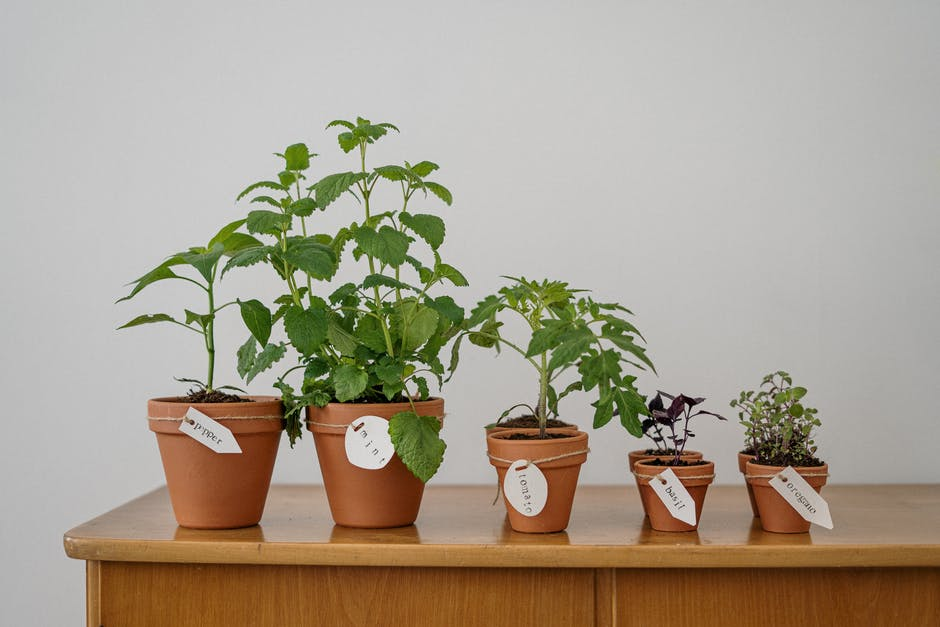 Reasons Indoor Plants Work Better During Self Isolation.